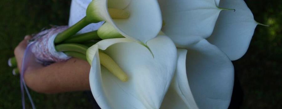 Beispiel: Persönliche Brautsträuße, Foto: Evis Blattwerk.