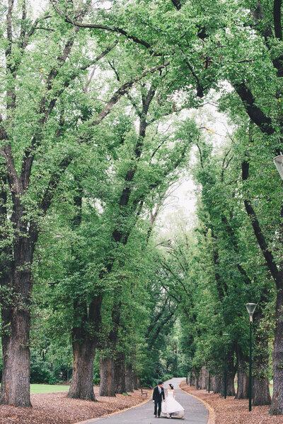 Casamento com gigantescas árvores enquanto testemunhas.