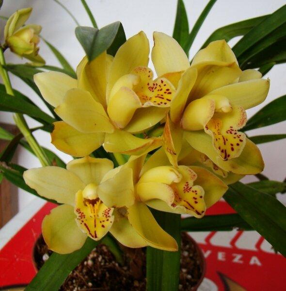 Flores amarillas para ramos de novia