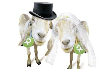 EinZiegartige Hochzeitsgeschenke / Oxfams Ziegen zum Verlieben