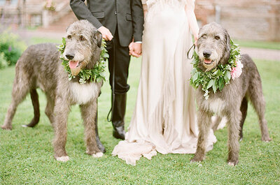 La foto de la semana: Una tierna boda con mascotas