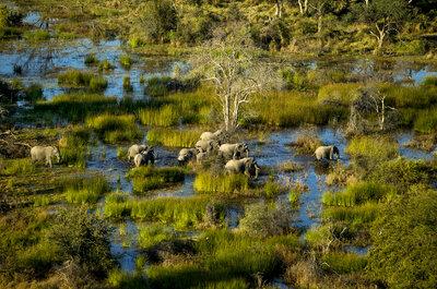 Luna di miele in Botswana: un tesoro nascosto nel cuore dell'Africa