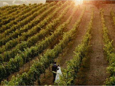 Casamento em Portugal de Mariana e Thiago: charme e elegância na vinícola!
