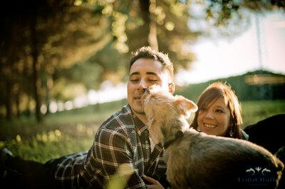 Fotografía de boda con perros