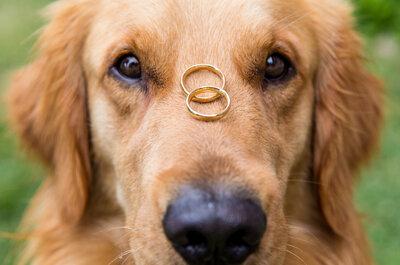 Quais os prós e os contras de ter um cachorro no início do relacionamento?