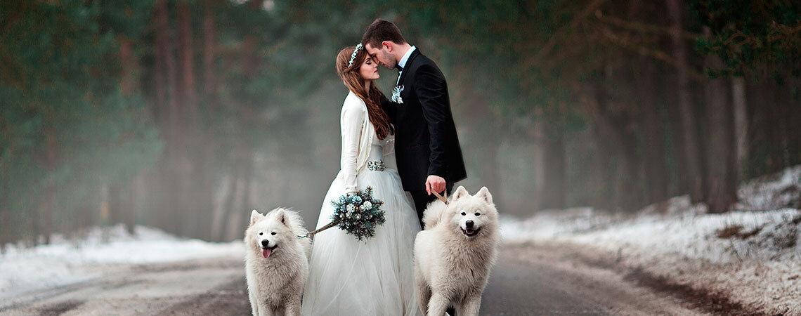 De spectaculaire huwelijksvideo opgenomen door een hond!
