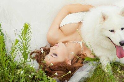 Hochzeitsgäste auf vier Pfoten: Die 30 schönsten Bilder von Brautpaaren, die wahre Tierliebhaber sind!