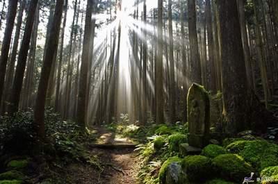 Attività uniche e ricordi speciali nella tua luna di miele in Giappone
