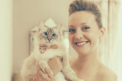 Les chats les plus adorables vus à des mariages ! Vous allez fondre...