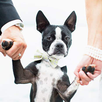Make Your Pets Wedding Mascots!