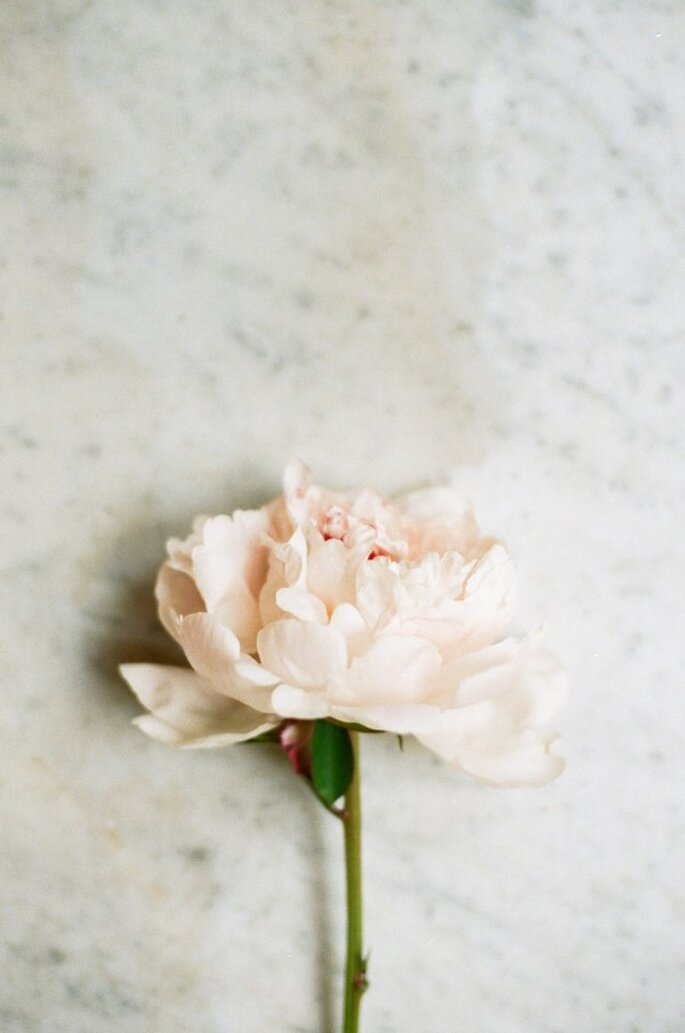 Un boutonniere para tu novio con peonías - Foto White Loft Studio