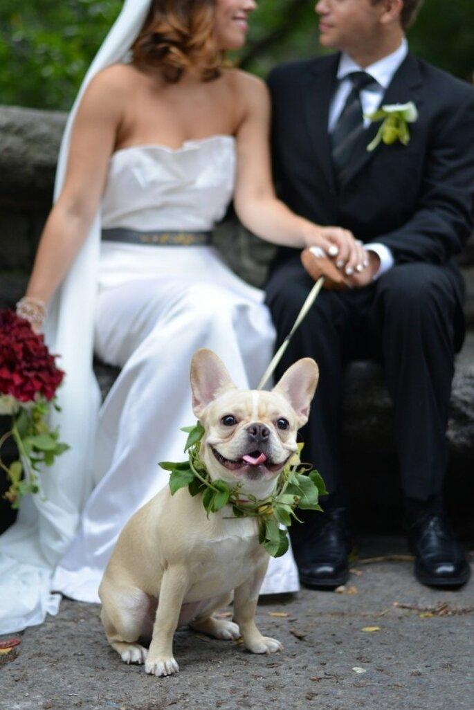 6 tips para incluir a tu mascota en la boda - Jessica Schmitt Photography