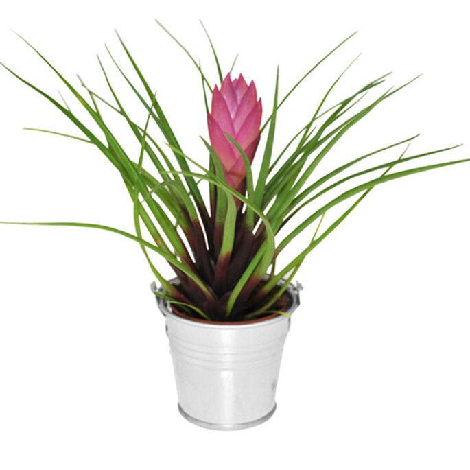 Choisir vos cadeaux d invit s selon votre th me de mariage for Plante interieur ikea