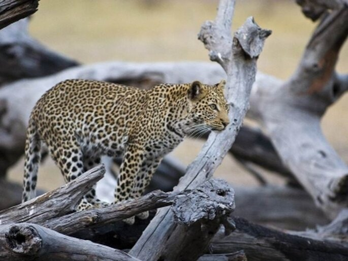 Zimbabwe. Foto via Enchanting Travels