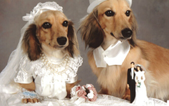 Dogs and weddings