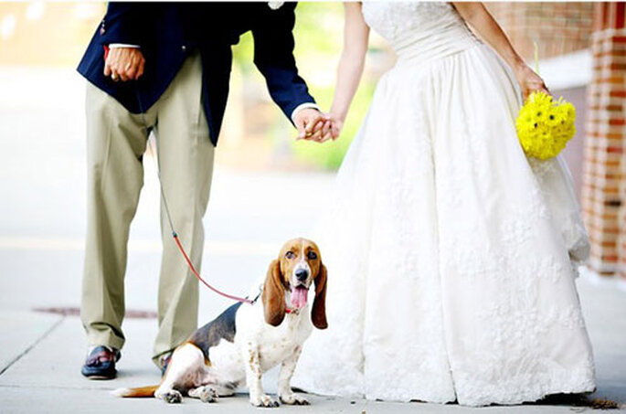 Que faire de vos animaux le jour de votre mariage ? (photo : oggisposi.tgcom)