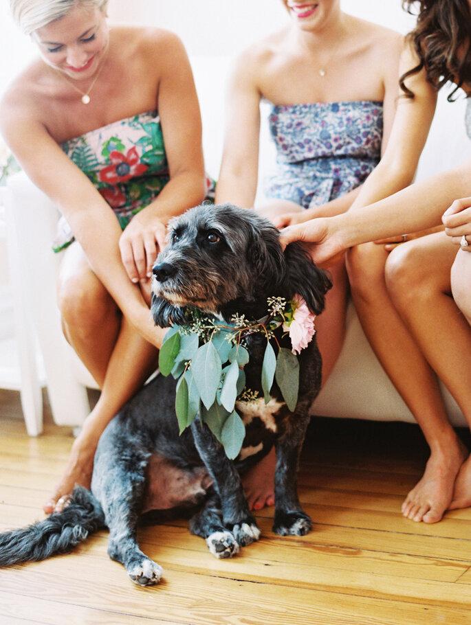 Tu mascota en tu boda - Katie Stoops Photography