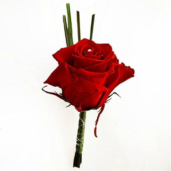 Rose préservée