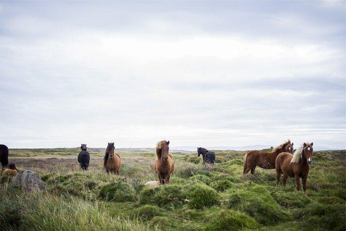 Islândia. Foto: Pixabay
