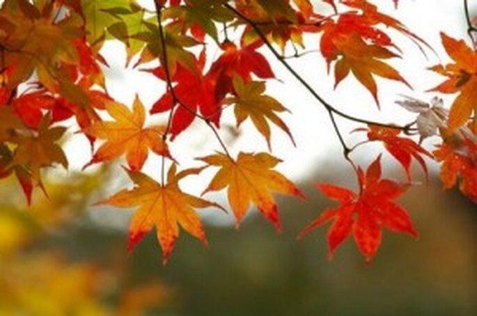 Las hojas pueden inspirar una boda de otoño