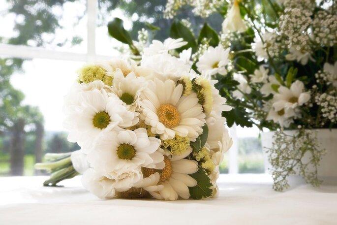 flora santa clara