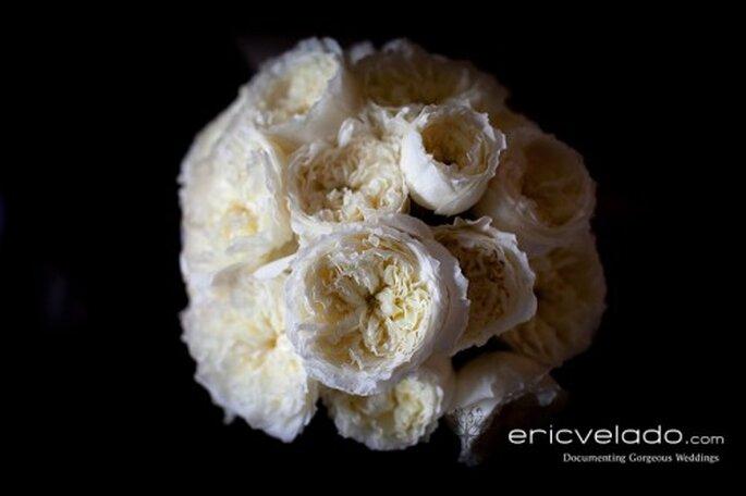 Weiße Rosen -  Foto: Eric Velado