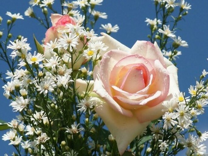 Flor silvestre especatacular para al ramo de novia romántico