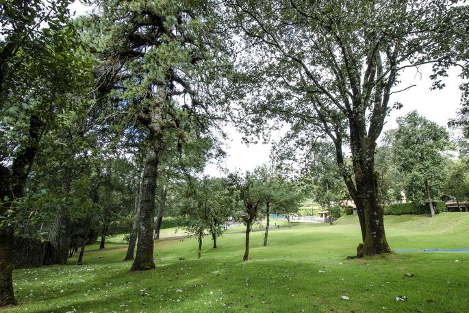 Rincón del Bosque
