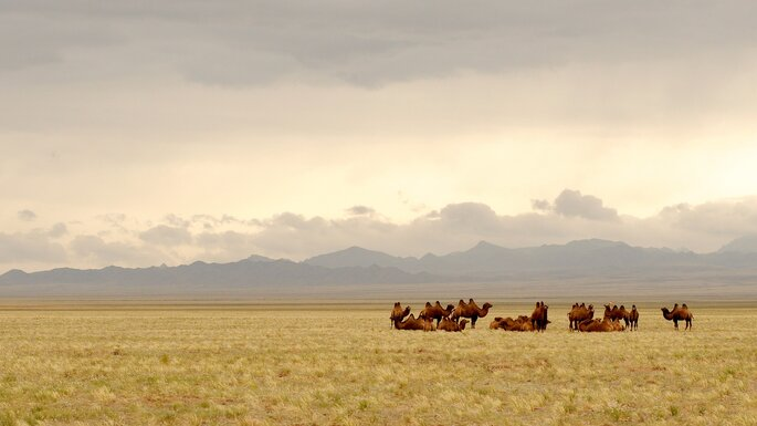 Mongólia. Foto: Pixabay