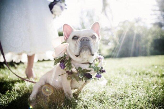 Perros pajesitos de boda. Foto de Viera Photographics en Style Me Pretty