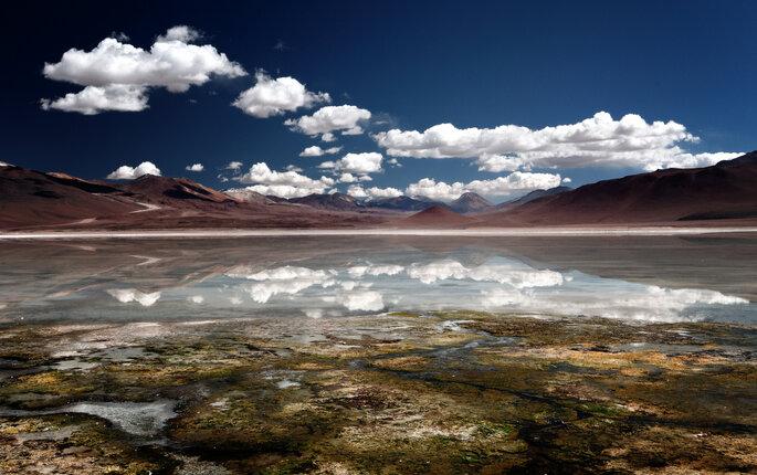 Envie d'aller faire un tour à Altiplano au Chili ? Crédit : Mike Green, Flickr