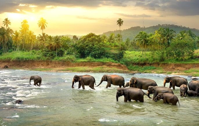 Foto via Shutterstock: givaga