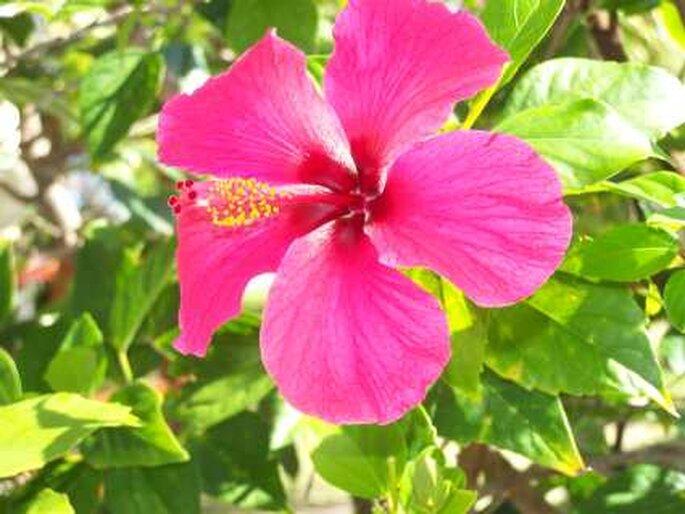 Traumhafte Flora und Fauna erwartet Sie auf Ihrer Hochzeitsreise auf Mauritius. Foto: Neelix / pixelio.de