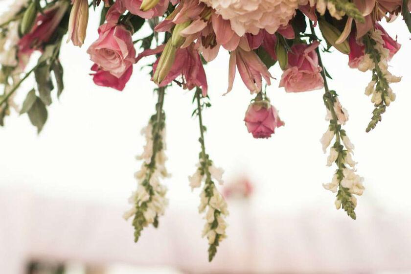 flores frescas tipo exportación