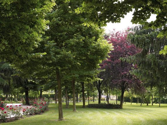 Il parco - Villa Maschio