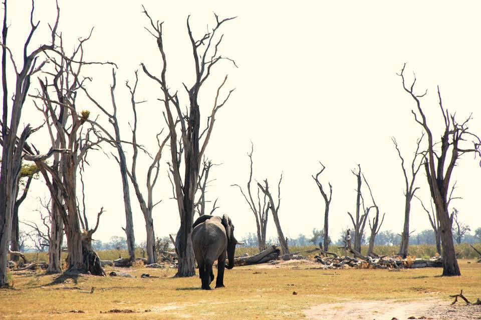 À Okavango Delta.