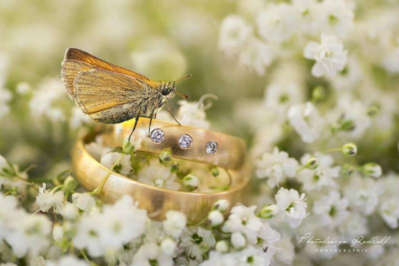 Beispiel: Detailfotos vom Profi, Foto: Photodesign Radloff.