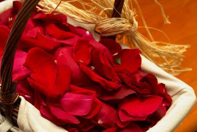 Pétalos de rosa para la celebración