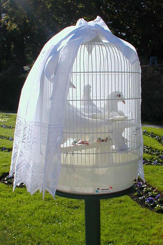 Beispiel: Wunderschöne Präsentation, Foto: Hochzeitstauben Fleckner.