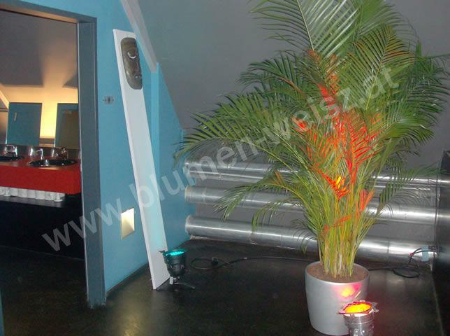 Beispiel: Grünpflanzen, Foto: Blumen Weisz.