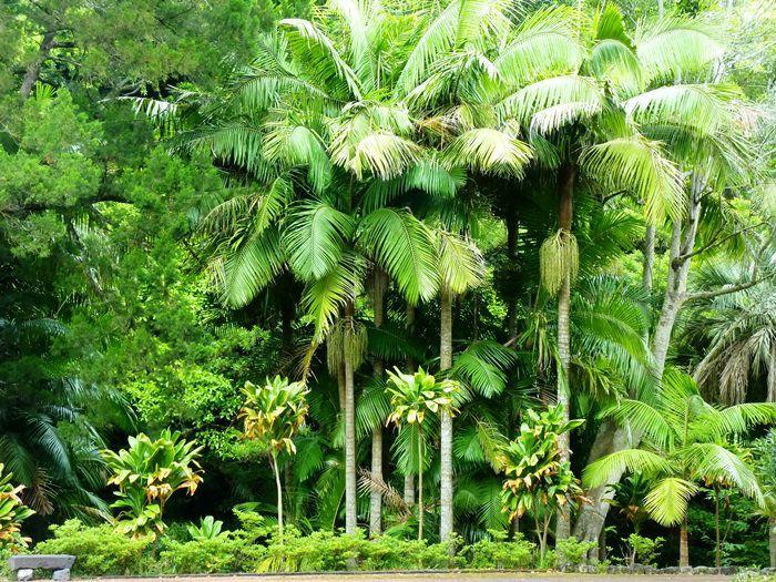 Foto: Casa do Jardim