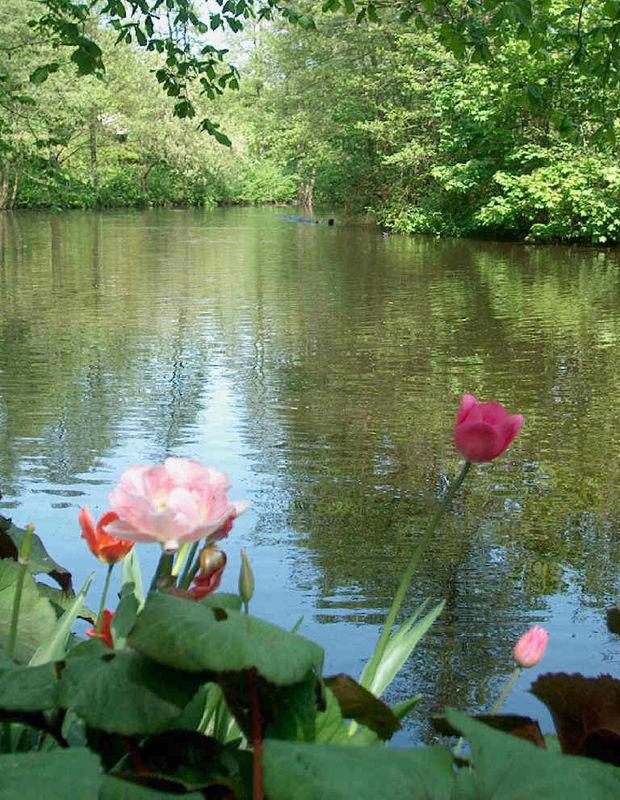 Beispiel: Teichanlage, Foto: Restaurant Alsterpark.