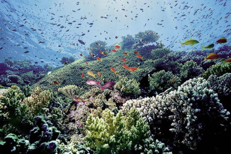 Beispiel: Ein Paradies unter Wasser, Foto: Manta Reisen.
