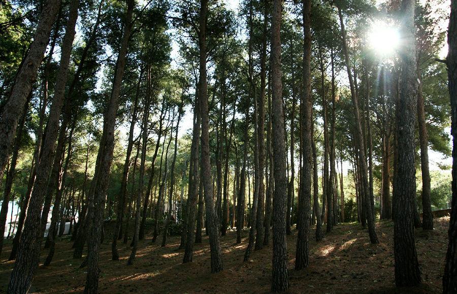 Els Tres Xalets cuenta con un área de pinos, que cubre más de la mitad de la finca.