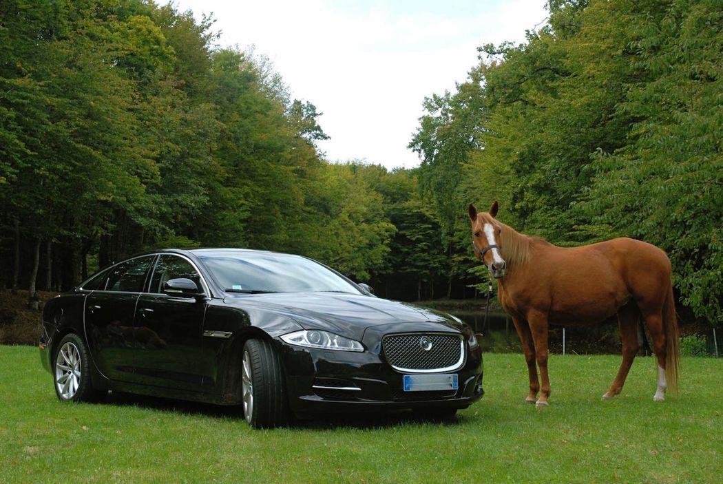 Jaguar pour les mariés - Manoir de La Mare Côtes d'Armor