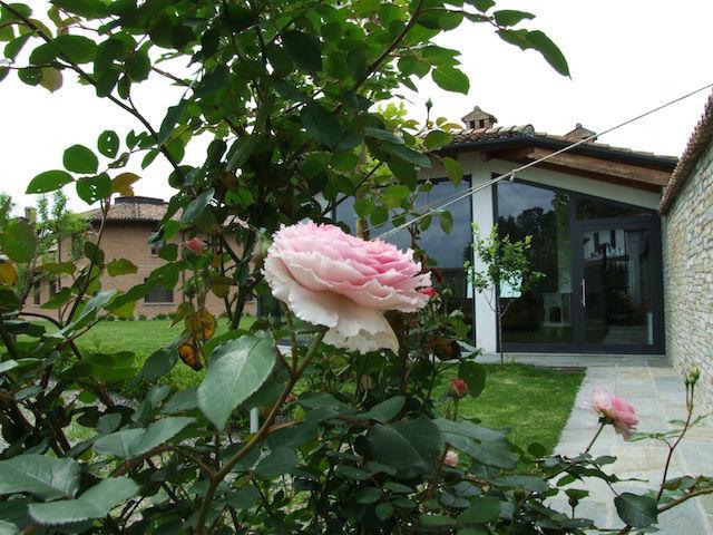 Cascina Alessi rose antiche in giardino