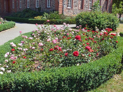 Beispiel: Rosenbeete, Foto: Schloss Langenselbold.
