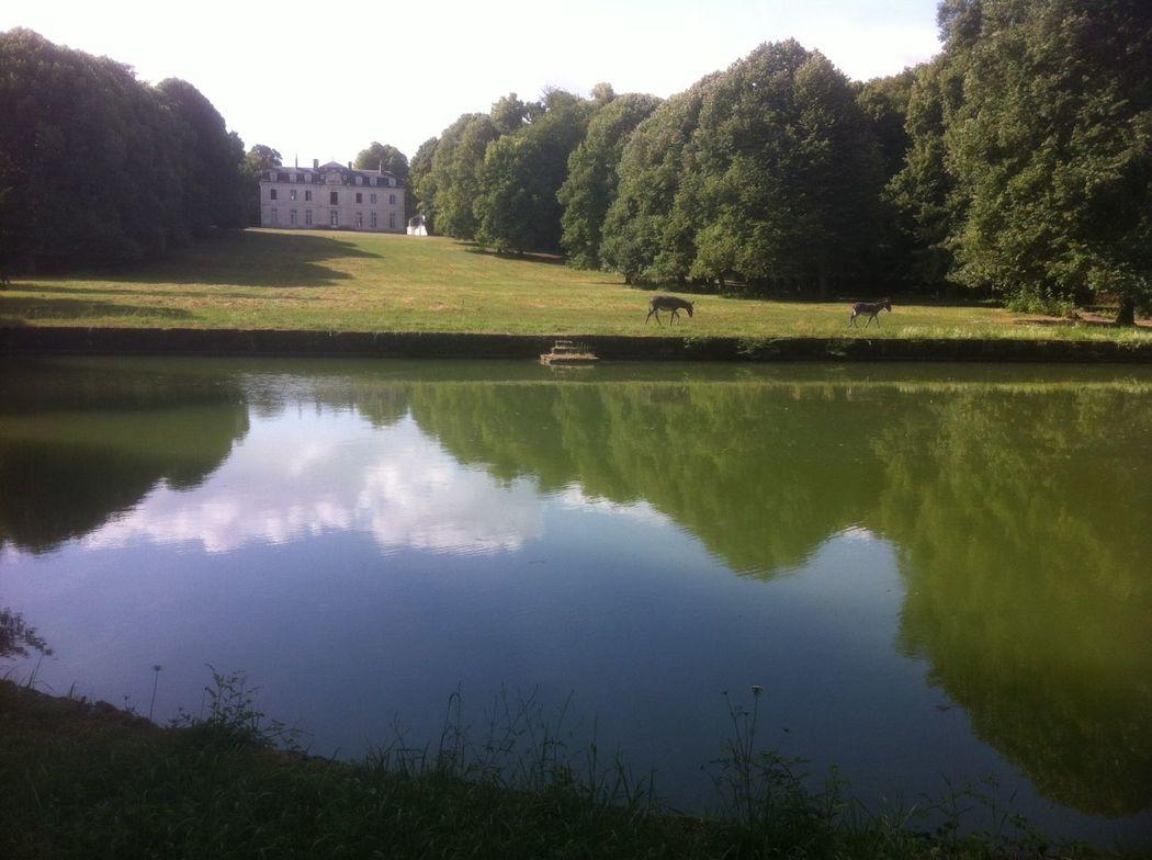 Le parc, les pelouses et la pièce d'eau