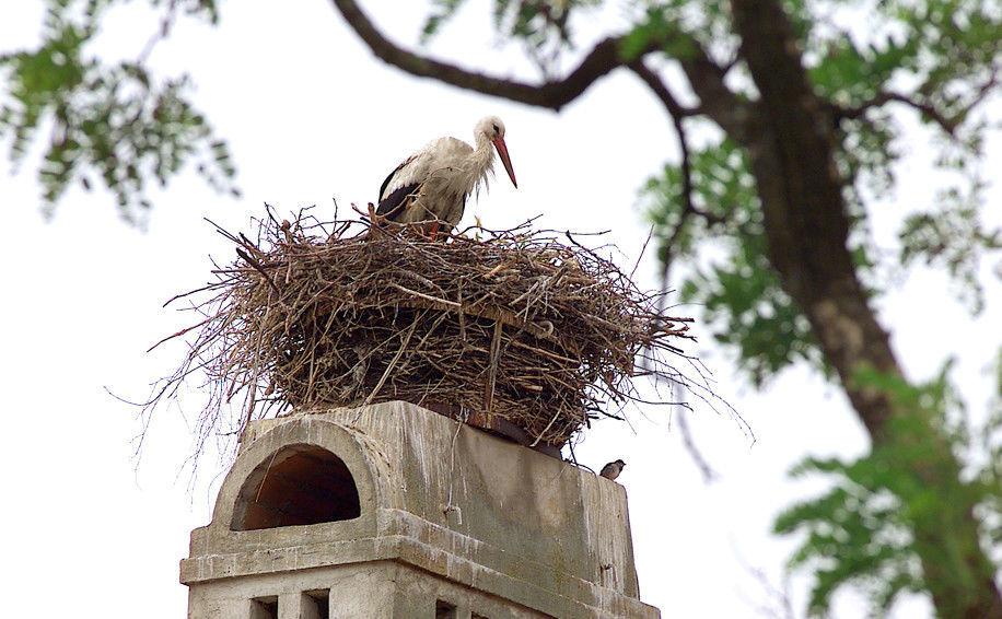 Beispiel: Storch auf dem Dach, Foto: Altes Brauhaus.