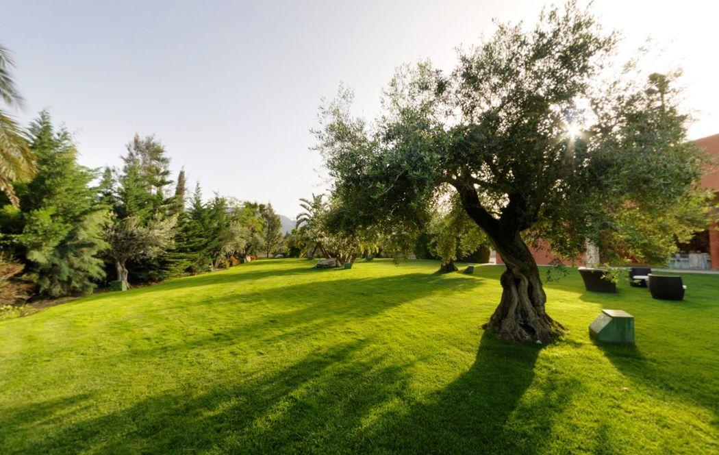 Jardín con olivos centenarios